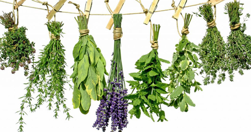Best Herbs Daily Routines